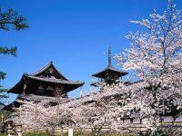 Bạn cần chuẩn bị gì khi đi Du học Nhật Bản